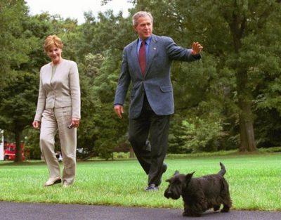 Barney Bush Dog