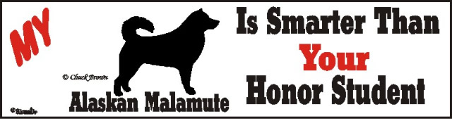 Alaskan Malamute Dog Smarter Than Honor Bumper Sticker