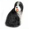 Browse Bearded Collie Gifts & Merchandise