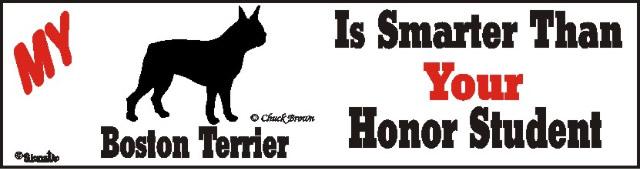 Boston Terrier Dog Smarter Than Honor Bumper Sticker