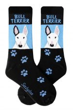 Bull Terrier White Socks Blue and Black in Color