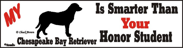 Chesapeake Bay Retriever Dog Smarter Than Honor Bumper Sticker