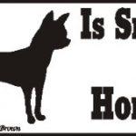 Chihuahua Smart Dog Bumper Sticker 1
