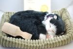 Black White Shorthair Cat Stuffed Animal Perfect Petzzz