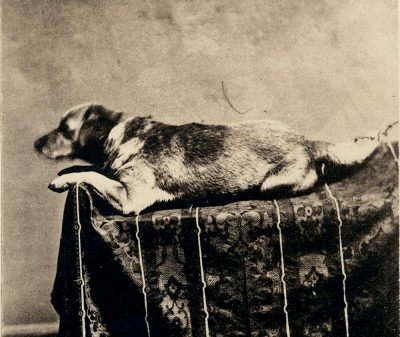 Fido Dog