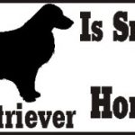Golden Retriever Dog Smarter Than Honor Bumper Sticker