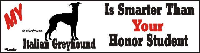Italian Greyhound Dog Smarter Than Honor Bumper Sticker