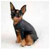 Find Miniature Pinscher Gifts & Merchandise
