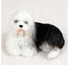 Browse Old English Sheepdog Gifts & Merchandise