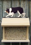 Border Collie Hand Painted Dog Bird Feeder Tri