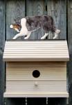 Border Collie Hand Painted Dog Bird House Blue Merle