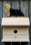 Yorkie Hand Painted Dog Bird House