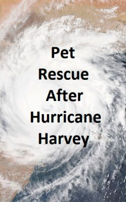 Hurricane Harvey Pets Animals Rescue