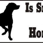 Pointer Smart Dog Bumper Sticker 1
