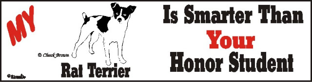 Rat Terrier Dog Smarter Than Honor Bumper Sticker