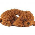 Toy Poodle Perfect Petzzz