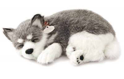 Alaskan Husky Perfect Petzzz
