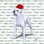 American Bulldog Dog Coasters Christmas Themed