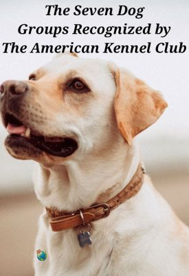 The American Kennel Club Recognizes 7 Dog Groups