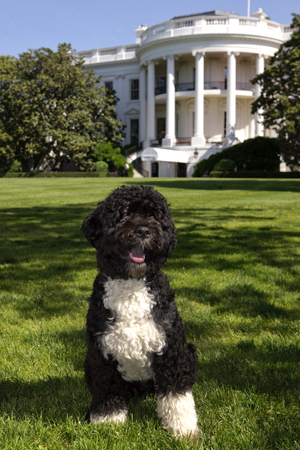 Barack Obama's Dog Fido