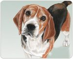 Beagle Cutting Board Tempered Glass