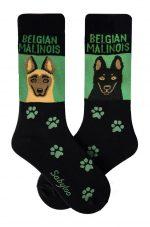Belgian Malinois Socks on Green Background