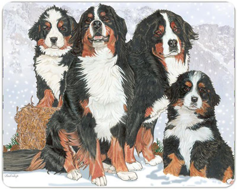 bernese-mountain-dog-cutting-board