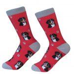 bernese-mountain-dog-socks-es