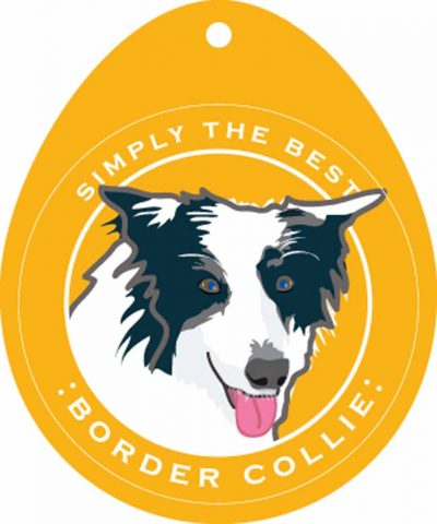 Border Collie Sticker 4×4″ 1