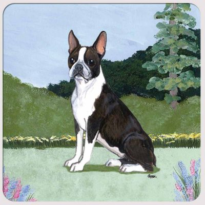 boston-terrier-coaster-yard-scene