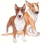 Bull Terrier Wooden Magnet Brown & White