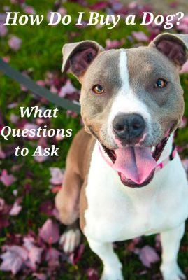 How Do I Buy a Dog?