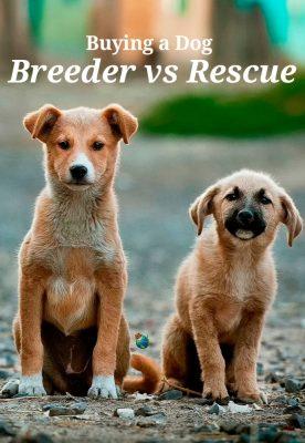 Buying a Dog - Breeder Vs. Rescue