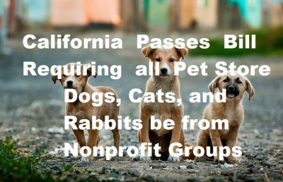 California Dog Selling Requirements