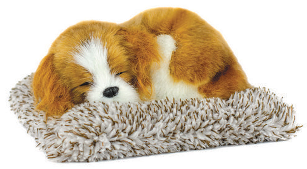 Cavalier King Charles Mini Perfect Petzzz