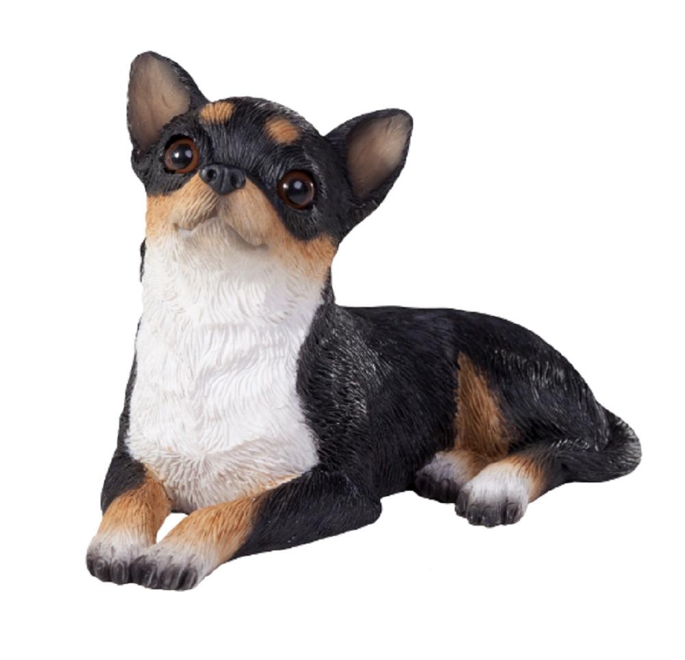 Chihuahua Sandicast Tricolor