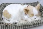 Chihuahua Life Like Stuffed Animal Breathing Dog Perfect Petzzz