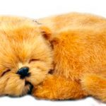 chow-chow-perfect-petzzz