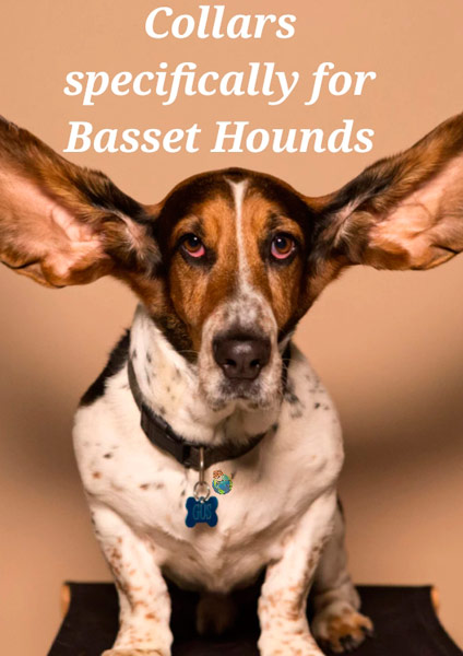 Collars for Basset Hounds