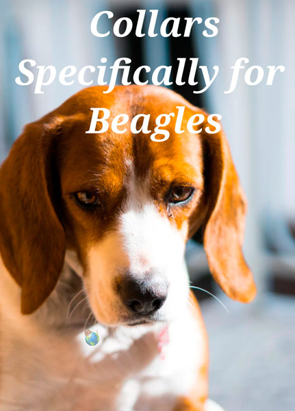 Collars for Beagles