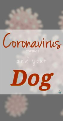 Coronavirus and Your Dog