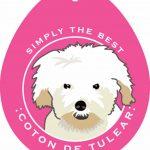 Coton de Tulear Sticker 4×4″ 1