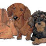 dachshund-wood-magnet