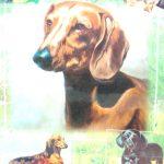 Dachshund Dog Gift Present Wrap 1