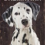 Dalmatian Sign – I Love My 5×10 1
