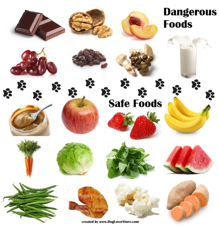 Foods That Are Safe To Feed Dogs