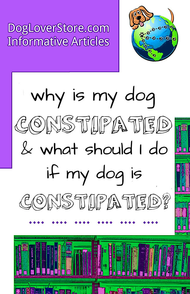 What Do You Do If Your Dog Gets Constipated