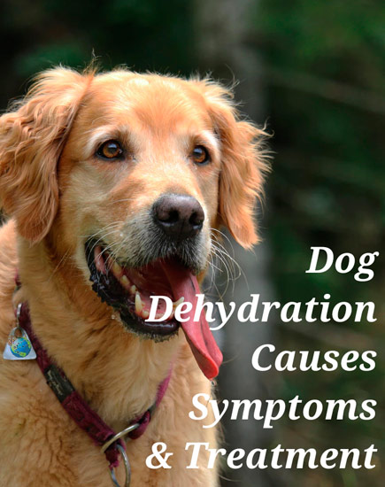Dog Dehydration - Causes & Symptoms