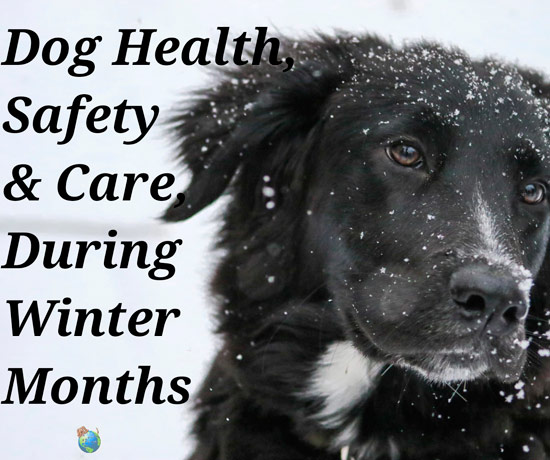 Keeping Your Dog Healthy & Safe During the Winter Months