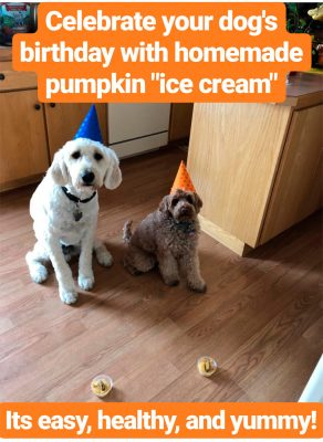 Ice Cream for Dog's Birthday